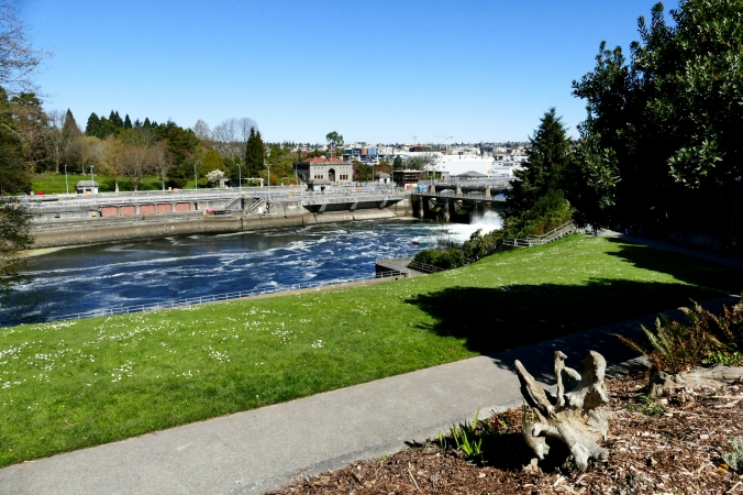 ballard locks and commodore park
