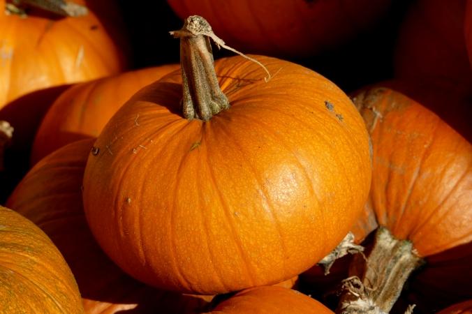 A perfect pumpkin.