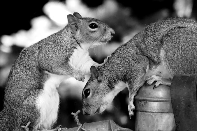 squirrels-005