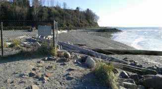 marina beach dog park in edmonds