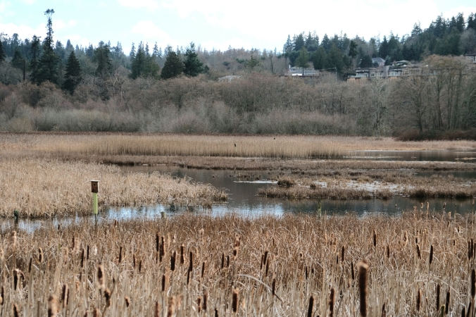 edmonds marsh