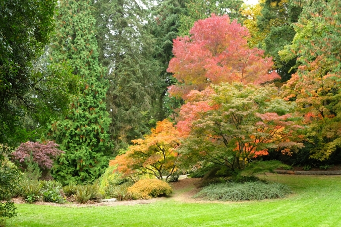 washington park arboretum in seattle
